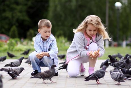 Rectory Farm (Eyebrook Wild Bird Feeds)