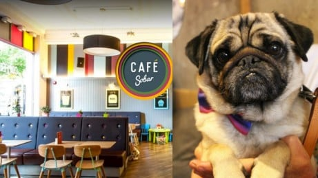 Pug Cafe Nottingham
