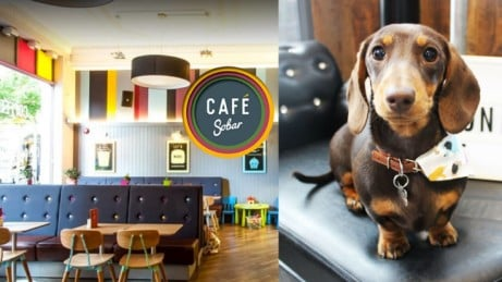 Pug Cafe presents: Dachshund Cafe Nottingham