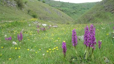 Lecture: The Fabulous Flora of the Peak District - Peter Machan