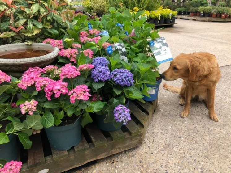 Our lovely Holly admiring all our beautiful shrubs we have in stock at the moment 🥰🧡
