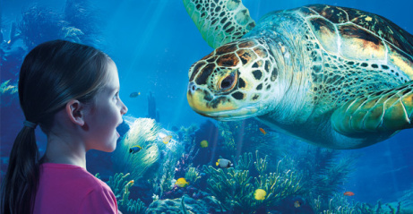 SAVE 24% on SEA LIFE Aquarium London Tickets!