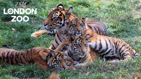 Fast Track Tickets to London Zoo for ONLY £66 for a family of 4!