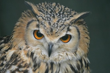 1/2 PRICE Entry to the Scottish Owl Centre for Two Adults - KIDS GO FREE!