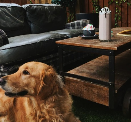 We are dog friendly! Come visit our Secret Garden out the back!