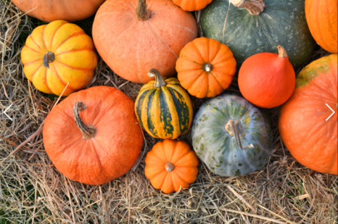 Join us for our pumpkin festival!