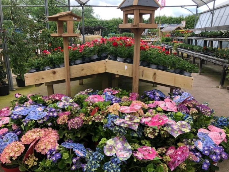 In our eyes, Hydrangeas are an essential to any garden!