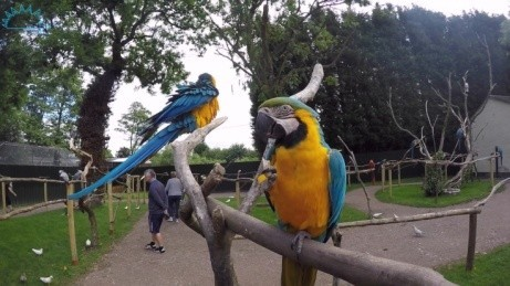 A Child's entry is just £5.25 all season round! Come and say HI to our wonderful birds!