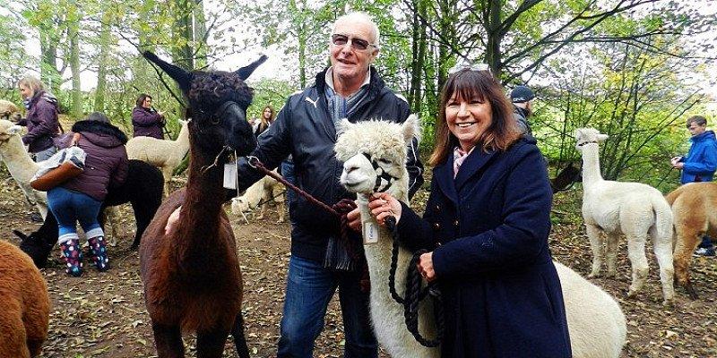 60% OFF - Derbyshire: 90-min Alpaca-Walking Experience!