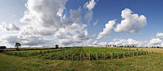Walton Brook's Wine