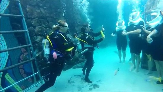 Save over 40% on Discovery Cove SeaVenture Experiences!