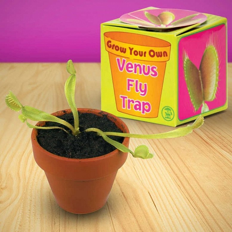 Grow Your Own Venus Fly Trap - A complete kit to grow your own Venus Fly Trap from seed, Only £5.00!