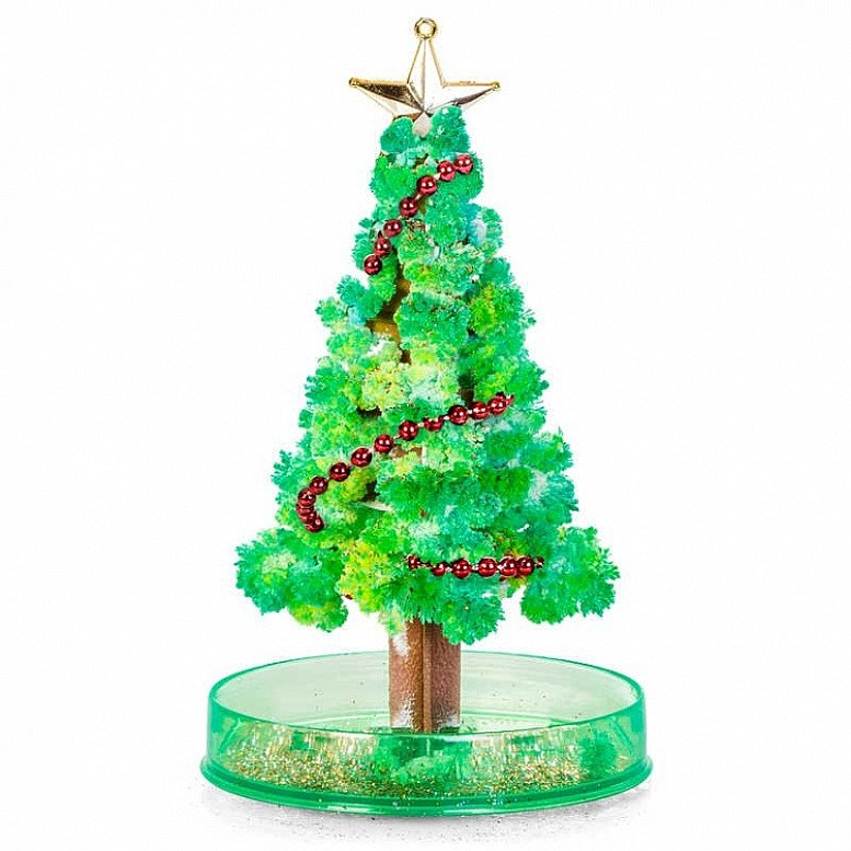 Grow your own Christmas Tree - Only £4!