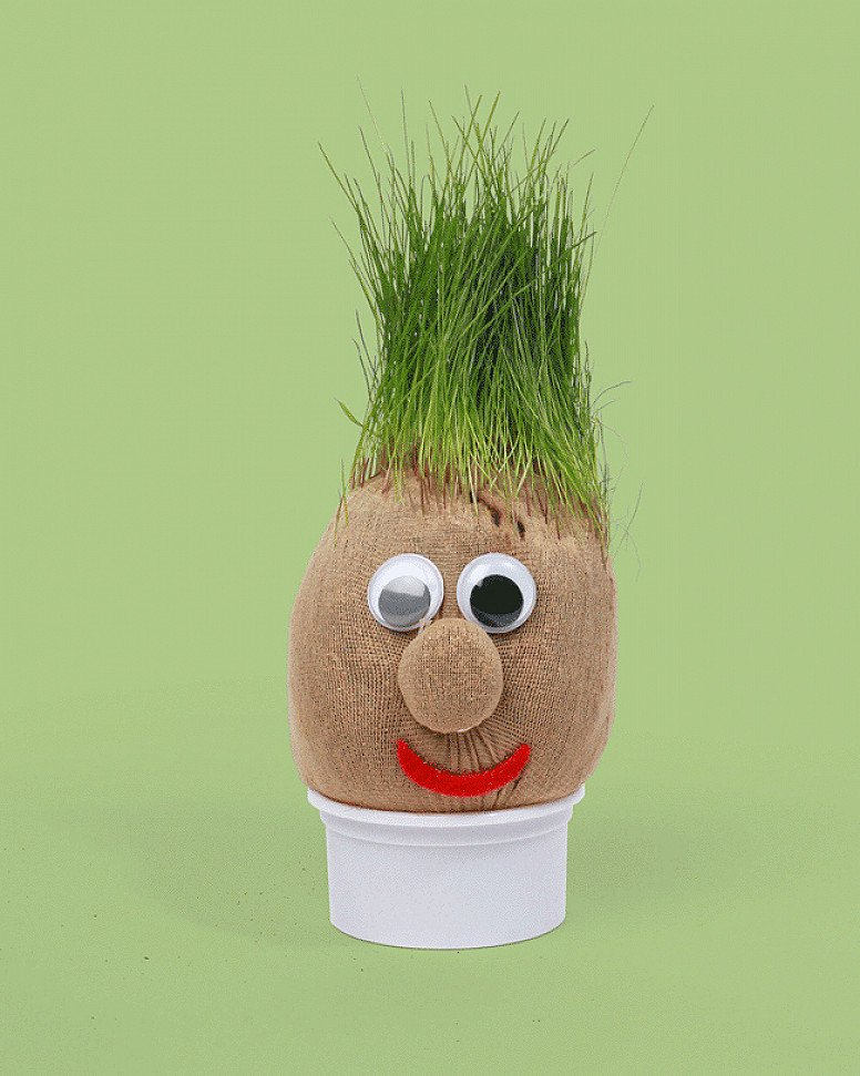 Have Fun Staying Home - Mr Grasshead: £5.99!