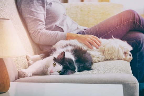 PET INSURANCE FROM PURELY PETS