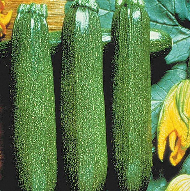 Get Gardening - Courgette Plants for just £6.99!