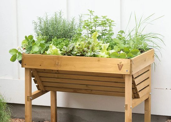 Create your own culinary herb garden that looks almost too good to eat!