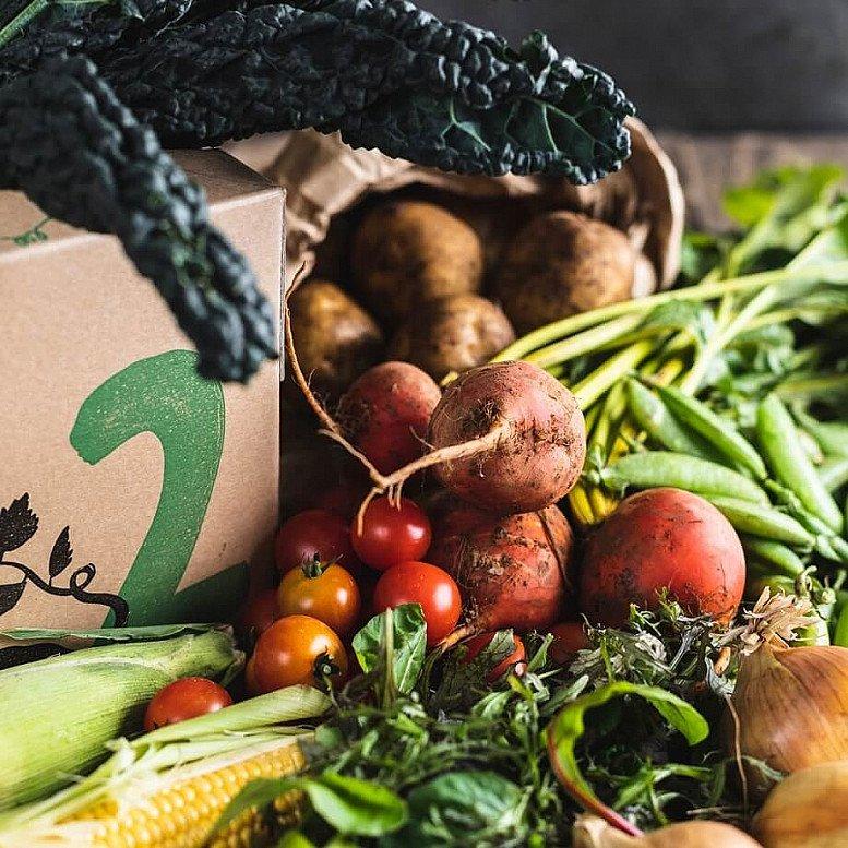 Organic Seasonal veg box, medium - £15.35!