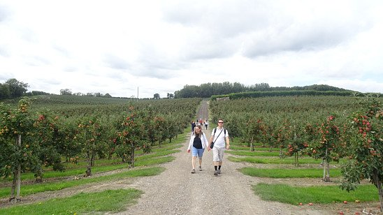 From Chilham to Canterbury Walk