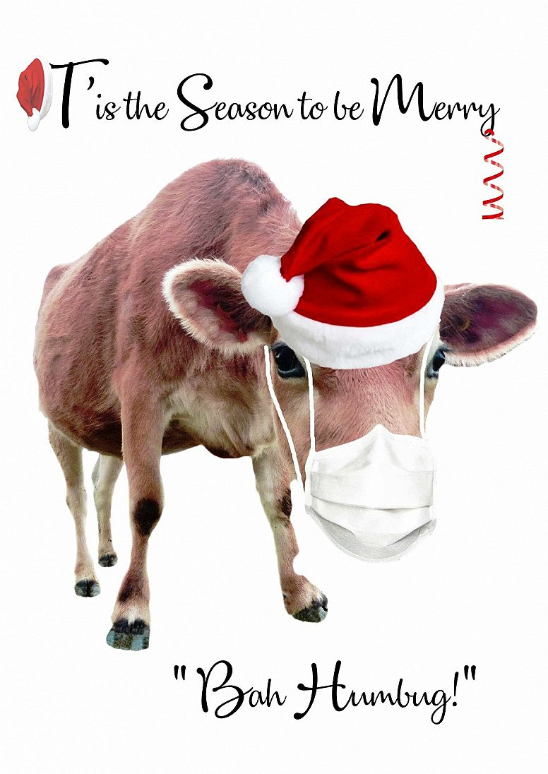 Christmas Cow Greetings cards - at cost price to get you into the Christmas Spirit