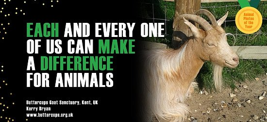 MISSION OF WORLD ANIMAL DAY