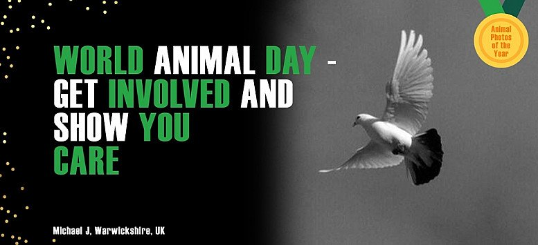 Why celebrate World Animal Day? Click here!
