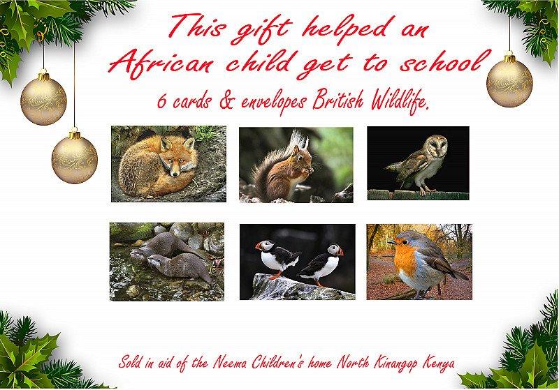 British wildlife  greetings cards (set of 6) in christmas presentation see through envelope