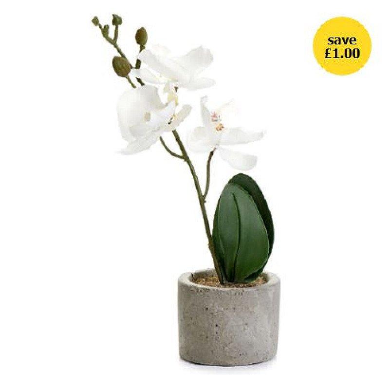 Home Accessories Sale - Wilko Artificial Mini Orchid in Cement Pot!