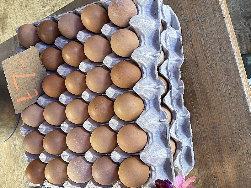 Amazing fresh free range eggs