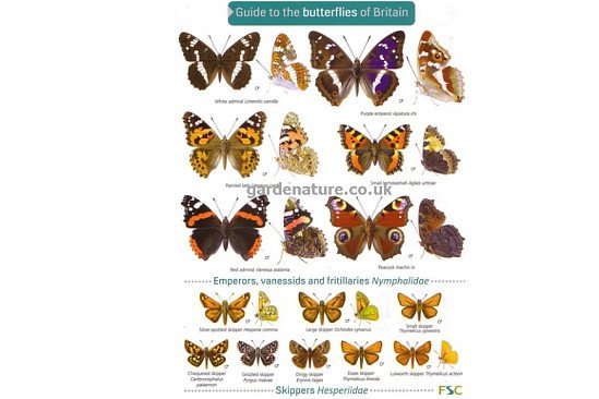 It's nearly Spring, connect with nature - Guide to Butterflies of Britain - £4.00!