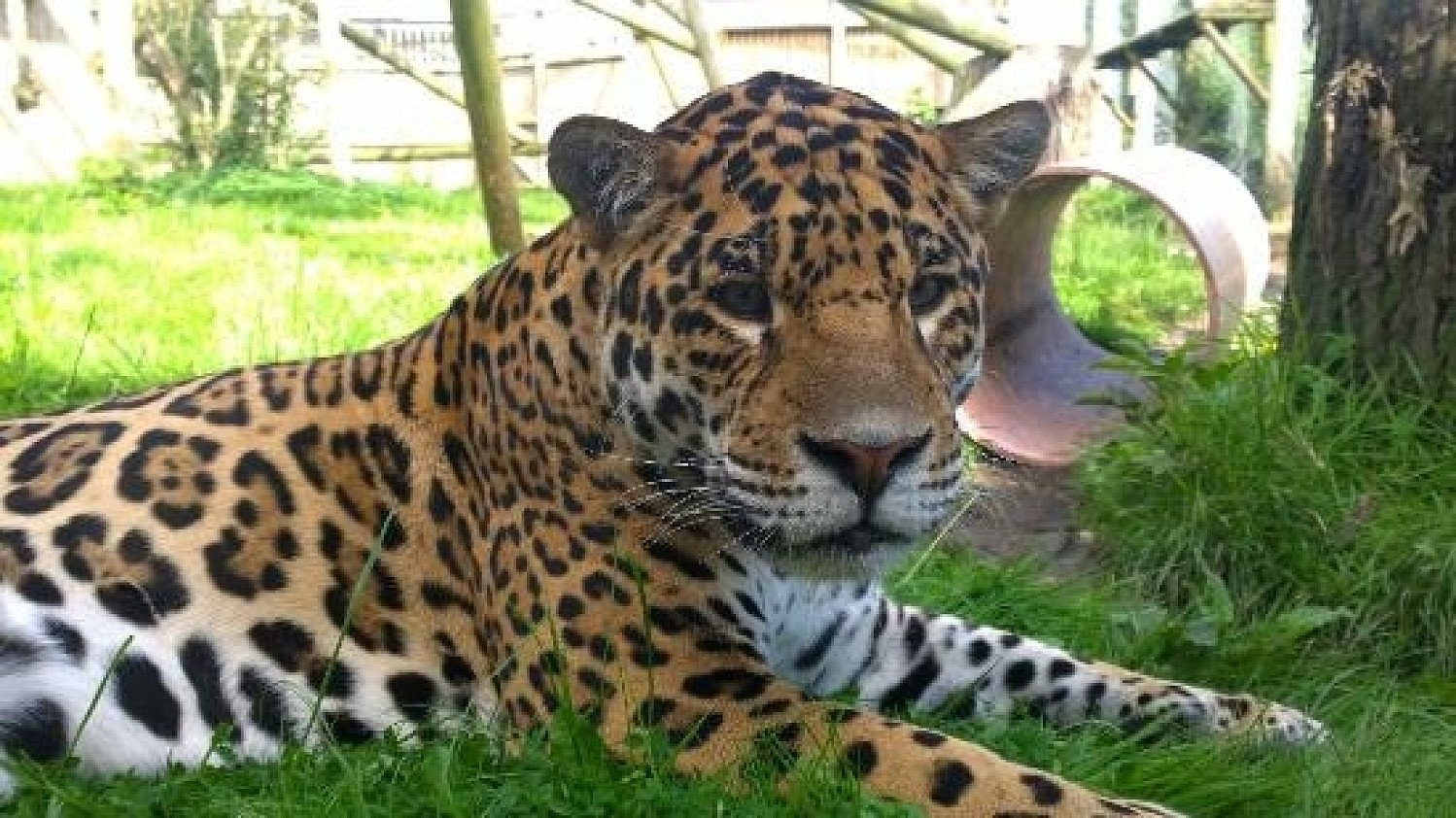 Up to 25% off Wingham Wildlife Park with a £1 Kids Pass Trial!