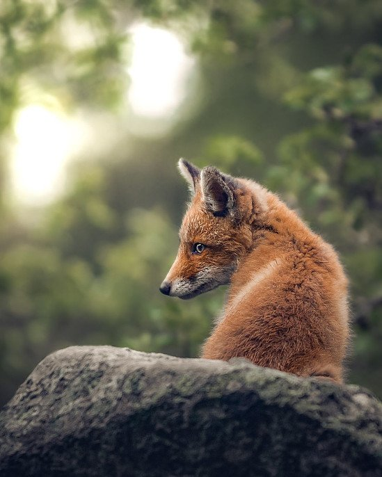 Love foxes? We do too!