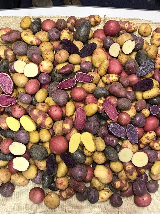 10% off all seed Potatoes!  #nationalgardeningweek AND naked gardening day on Saturday!