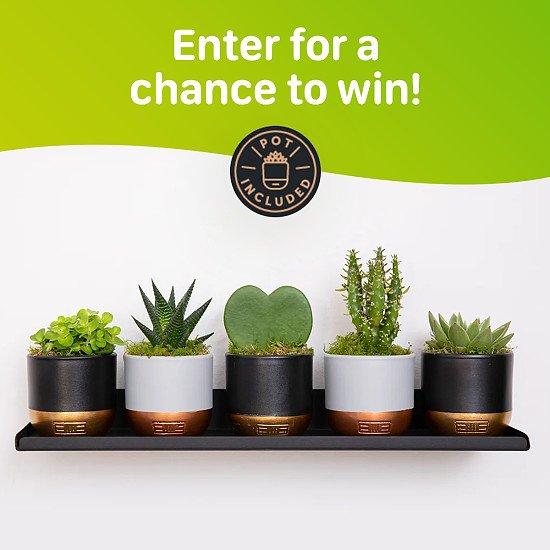 WIN this Plant Shelfie Bundle