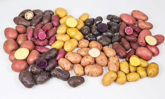 Plant your own potatoes now for a August Harvest - 10% off