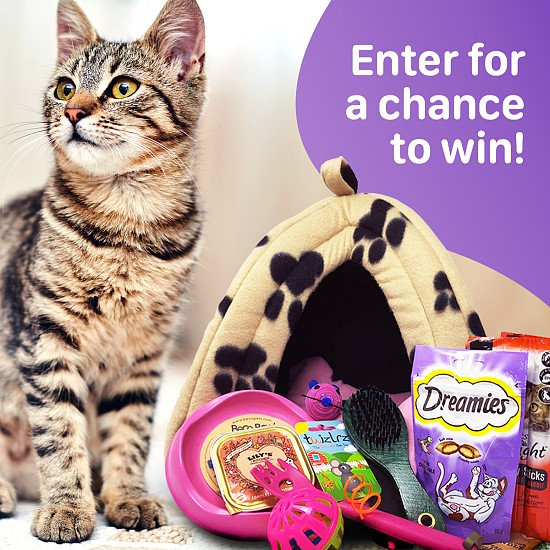 WIN the Ultimate Cat Hamper full of toys and tasty treats