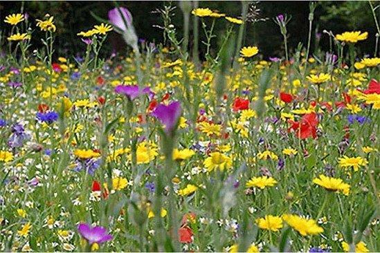 Bees & Butterflies Wildflower Seed Mix