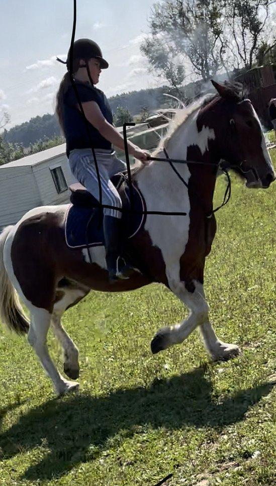 Pony days