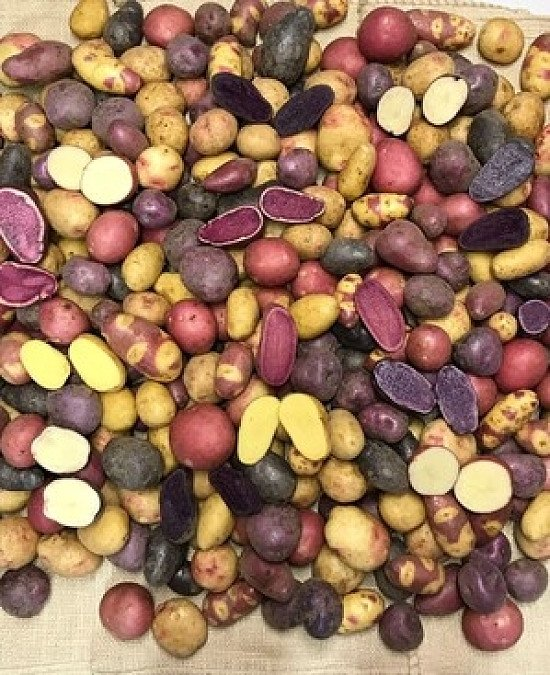 Potato House have been awarded the best Seed Potato Supplier 2021.  £5 off. Grow your own Potatoes