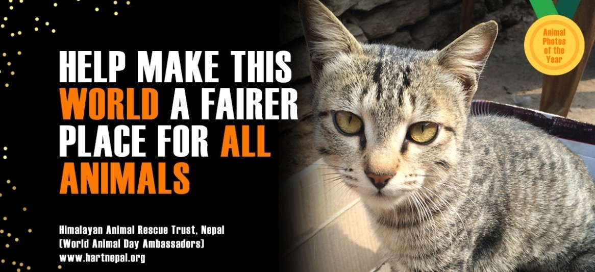 MISSION: TO RAISE THE STATUS OF ANIMALS IN ORDER TO IMPROVE WELFARE STANDARDS AROUND THE GLOBE